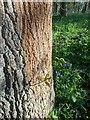 TF0821 : Tiny signs of spring by Bob Harvey