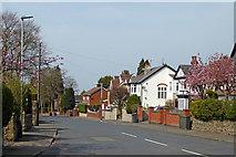 SO9095 : Muchall Road in Penn, Wolverhampton by Roger  Kidd
