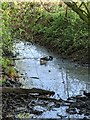 TF0821 : Ducks by Bob Harvey
