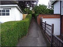 TQ2589 : Path from Brookland Hill to Hutchings Walk by David Howard