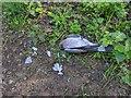 TF0820 : Dead Pigeon by Bob Harvey