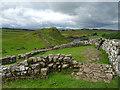 NY7166 : Milecastle 42. Hadrian's Wall by habiloid