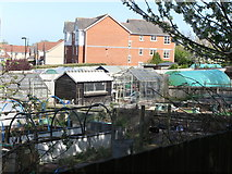 NZ3371 : Allotments adjoining West Monkseaton Metro Station by Geoff Holland