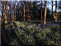SE2535 : Bluebell woods at the end of Broadlea Close by Stephen Craven