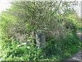 NZ3271 : Old Stone Gatepost near South Wellfield by Geoff Holland