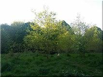 TQ2087 : Woodfield Park, Kingsbury by David Howard