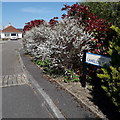 SZ0794 : Ensbury Park: Camellia Gardens by Chris Downer