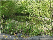 SE2635 : Kirkstall Valley Nature Reserve: pond by Stephen Craven