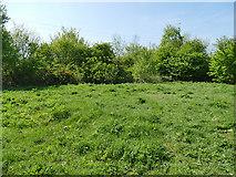 SE2635 : Kirkstall Valley Nature Reserve: hilltop by Stephen Craven