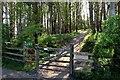 NZ1367 : Bridleway near Bays Leap Farm by Andrew Curtis