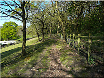SE1226 : Path at Throstle Nest by Humphrey Bolton