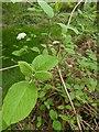 TF0820 : Shrub leaves by Bob Harvey