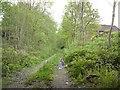 SJ9493 : Abandoned railway line by Gerald England