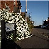 SZ0694 : Ensbury Park: Cornelia Road by Chris Downer