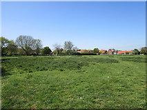 SK8354 : Grass field on the edge of Coddington by Jonathan Thacker