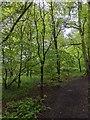 TF0820 : A little oak by Bob Harvey