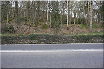 SE1039 : Bell Bank Wood on northwest side of Harden Road by Luke Shaw