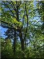 TF0820 : Sunlight through an oak by Bob Harvey