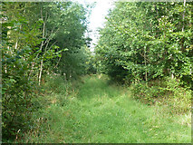 SU8216 : Track in Phillis Wood by Robin Webster