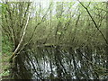 SE3520 : Willow reflected, Ashfields, Southern Washlands nature corridor by Christine Johnstone