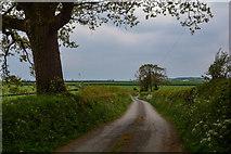 SS7811 : Thelbridge : Curriton Lane by Lewis Clarke