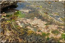 SX6643 : Rockpool near Long Stone by Derek Harper