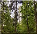 TF0820 : Tree depth by Bob Harvey