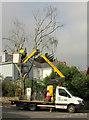 SX9065 : Felling a birch, Torre by Derek Harper