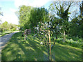 SE4036 : Young fruit trees in Barwick-in-Elmet community orchard by Stephen Craven