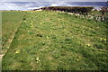 SE2091 : Cowslips on field edge north of Grazing Nook by Roger Templeman