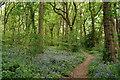 TQ3761 : Frith Wood by Peter Trimming