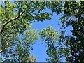 TF0820 : Blue above by Bob Harvey