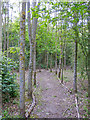 TQ5885 : Path in Woodland near Thames Chase Forest Centre (Broadfields) by Roger Jones