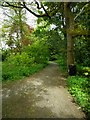 NS5572 : Path through strip of woodland by Richard Sutcliffe