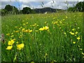 SO7944 : Buttercups in a field by Philip Halling