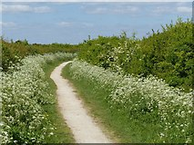 SK6736 : Grantham Canal towpath near Cropwell Bishop by Alan Murray-Rust