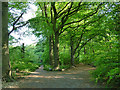 SE2636 : Path junction in Queen's Wood by Stephen Craven
