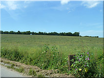 TR2954 : Fallow field north of Heronden by Robin Webster