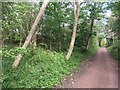 NT4775 : Haddington railway path by Richard Webb
