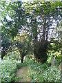 TQ5570 : Ancient yew in St John the Baptist Churchyard, Sutton at Hone by Marathon