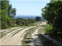 TQ4528 : A major track, Ashdown Forest by Robin Webster
