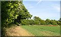 TL5102 : Arable land nr Mill Lane, Toot Hill by Roger Jones