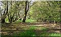 TL5003 : Edge of woodland near bridleway, Mill Lane, Toot Hill by Roger Jones