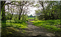 TL5003 : Bridleway at edge of woodland near Mill Lane, Toot Hill by Roger Jones