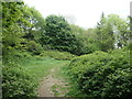 SE3219 : Clearing at the top of Lowe Hill, site of Wakefield Castle by Christine Johnstone
