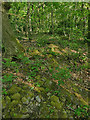 SE2539 : Remains of a wall in Ireland Wood by Stephen Craven