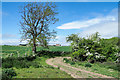 NZ1215 : Osmond Croft beyond bend in farm road by Trevor Littlewood