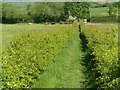 SK6445 : Footpath to Lambley by Alan Murray-Rust