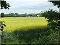 SE3825 : Oilseed rape, south of Scholey Hill by Christine Johnstone