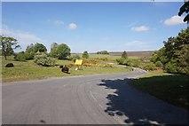 SE7290 : Anserdale Lane towards Hutton-le-Hole by Ian S
